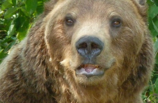 Libearty bear sanctuary in Brasov